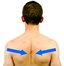 Dunsborough Physio Exercises Scapular Retraction